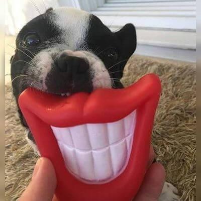 Brinquedo Bocona Pet
