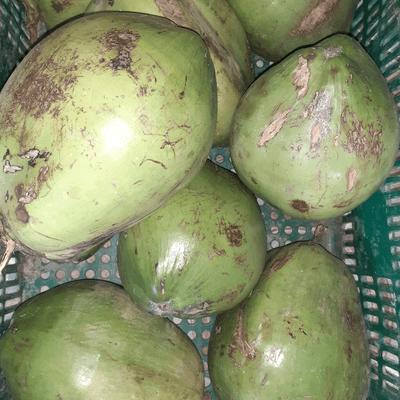 Coco Verde  da Bahia - Unidade